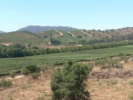 Vineyards in the countryside