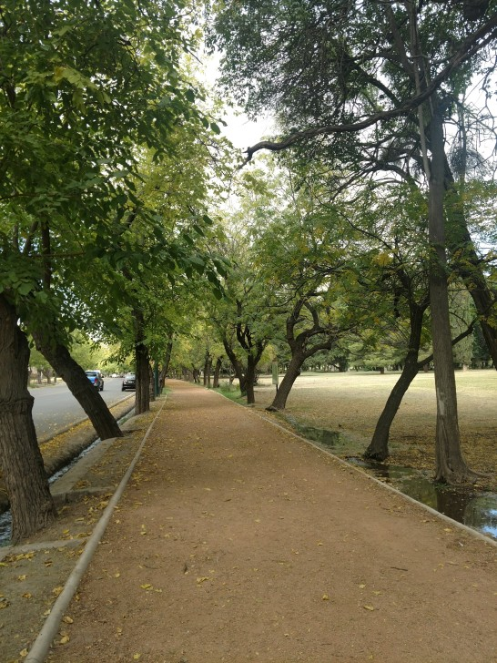 Tree-lined streets all over Mendoza