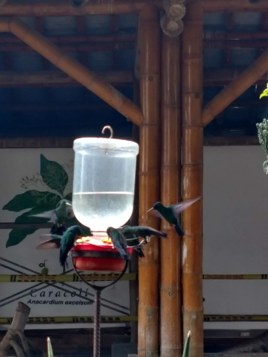 Hummingbirds at the botanical gardens