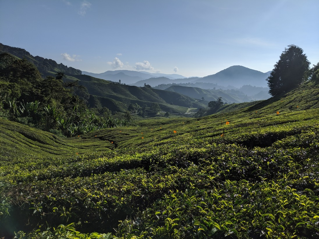 Brits running the tea plantations