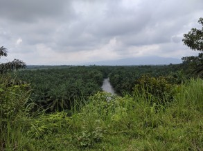 Beautiful jungle views