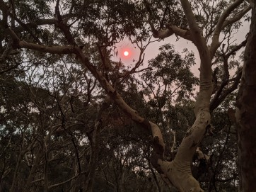 The red smoky sun
