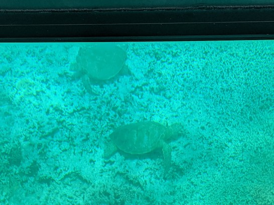 Sea turtles from the glass bottom boat